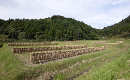 お米を育てる田んぼ